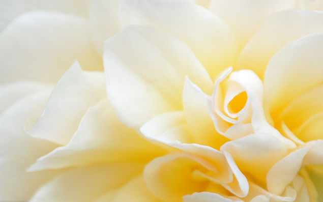 free flower desktop wallpaper yellow preview